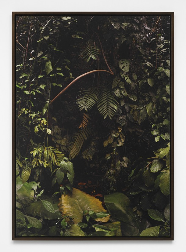 julius-von-bismarcklandscape-painting-jungle2015300dpi