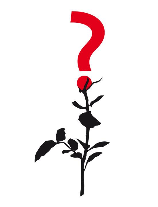 Rose_Frage