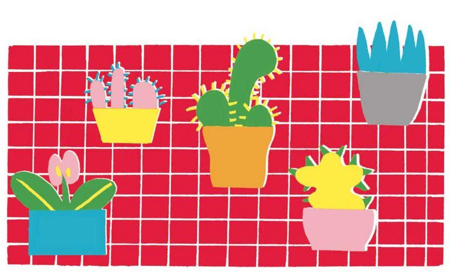 Kakteen, Illustration: Anne Baier